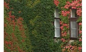 Αναρριχώμενα φυτά