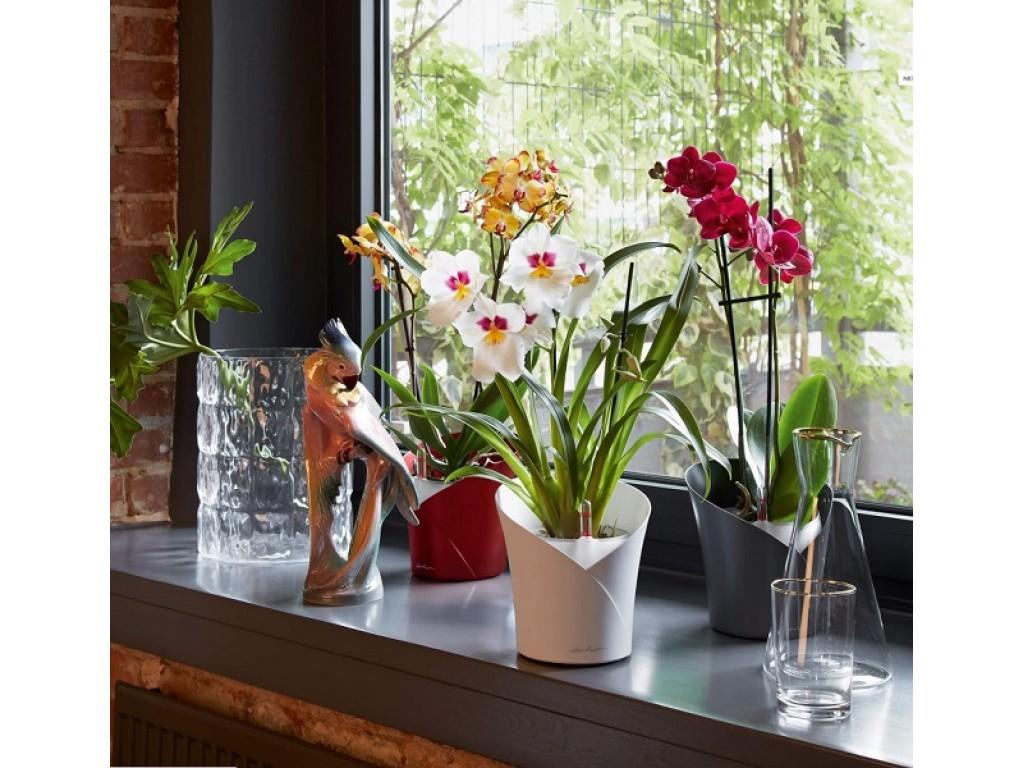 Lechuza Orchidea Αυτοποτιζόμενη Επιτραπέζια Γλάστρα Lechuza αυτοποτιζόμενες γλάστρες