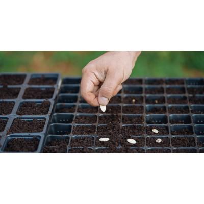 Σπορεία σπόρων - Γλάστρες Φυτωρίου