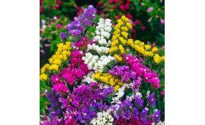 Σπόροι λουλουδιών